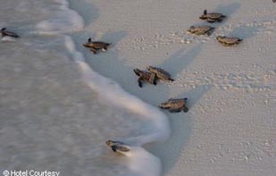 Offerta viaggio a Praslin & Bird Island!