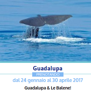 offerta viaggio Guadalupa