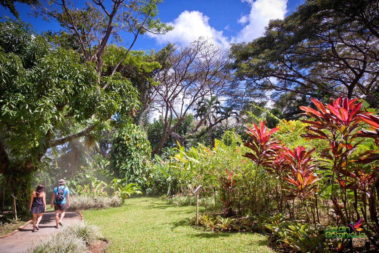 giardino botanico guadalupa caraibi