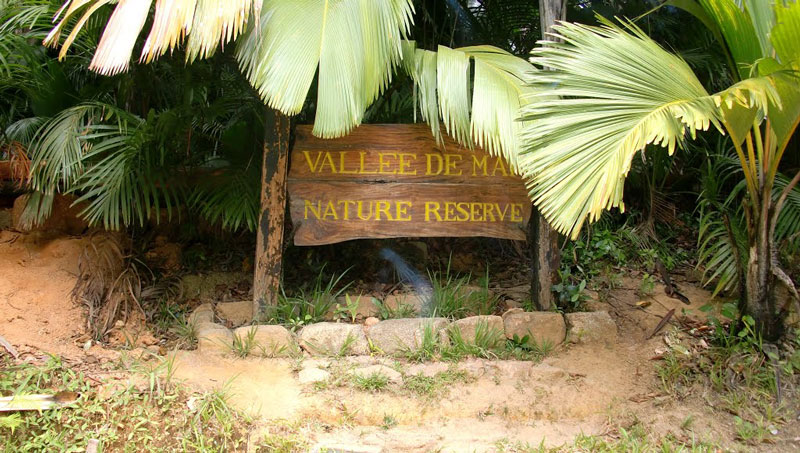 tour Valle de mai seychelles